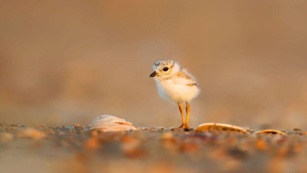 Vögelchen