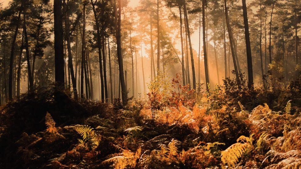 Herbstfeuer